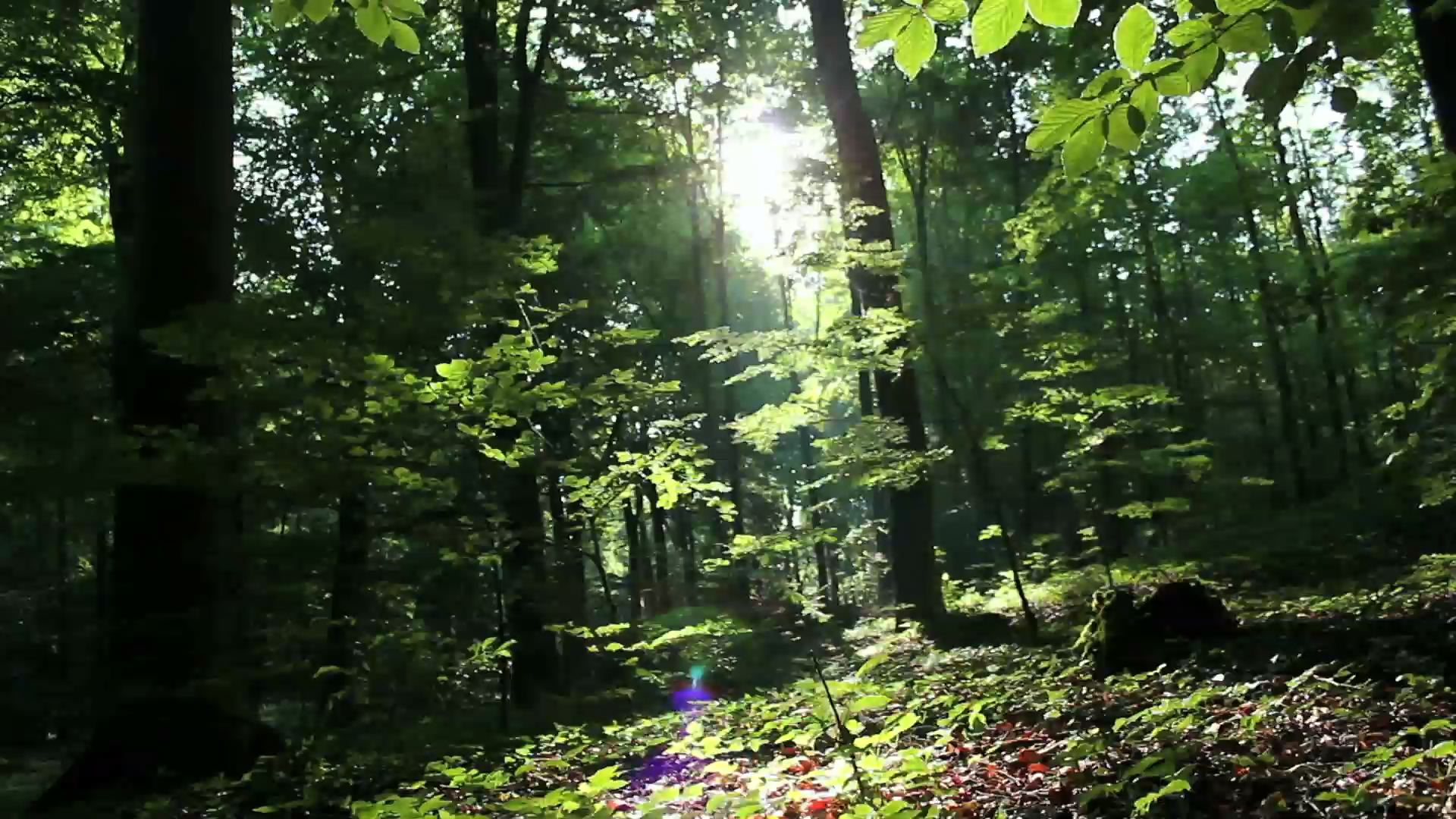 forest_video_3_preview_1
